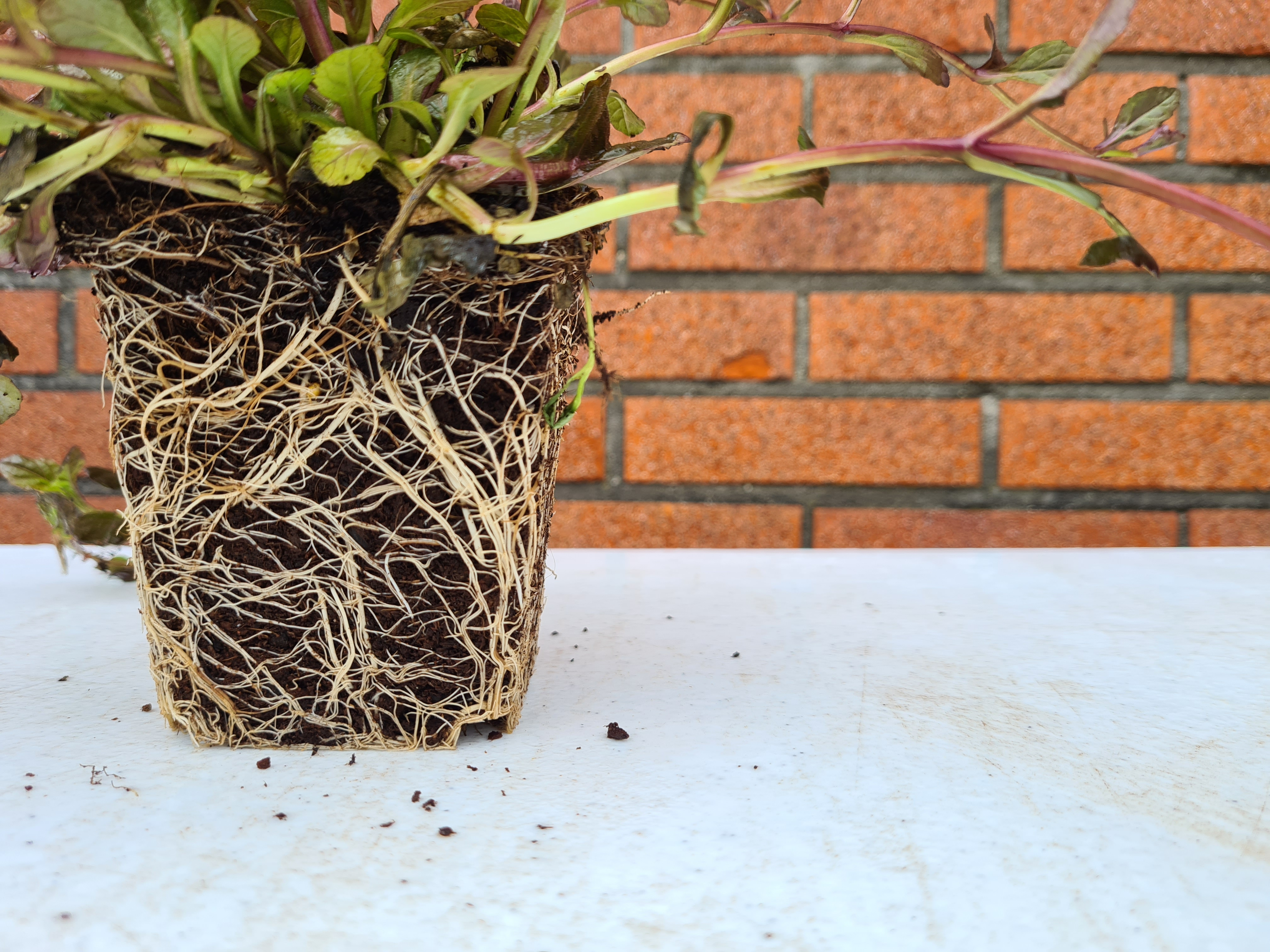Kwaliteit tuinplanten yarinde borderpakket