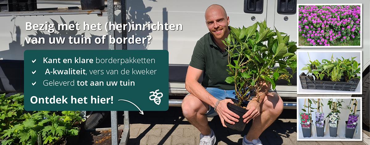 kant en klare borderpakketten tuinplanten