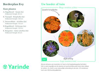 beplantingsplan borderpakket Evy
