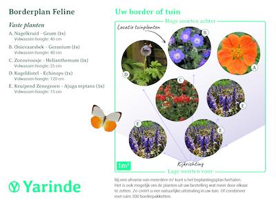 beplantingsplan borderpakket Feline