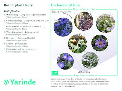 Beplantingsplan borderpakket Harry