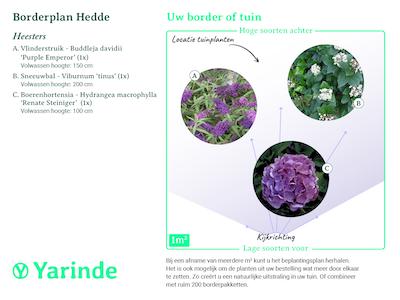 beplantingsplan borderpakket Hedde