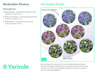 Beplantingsplan borderpakket Thomas