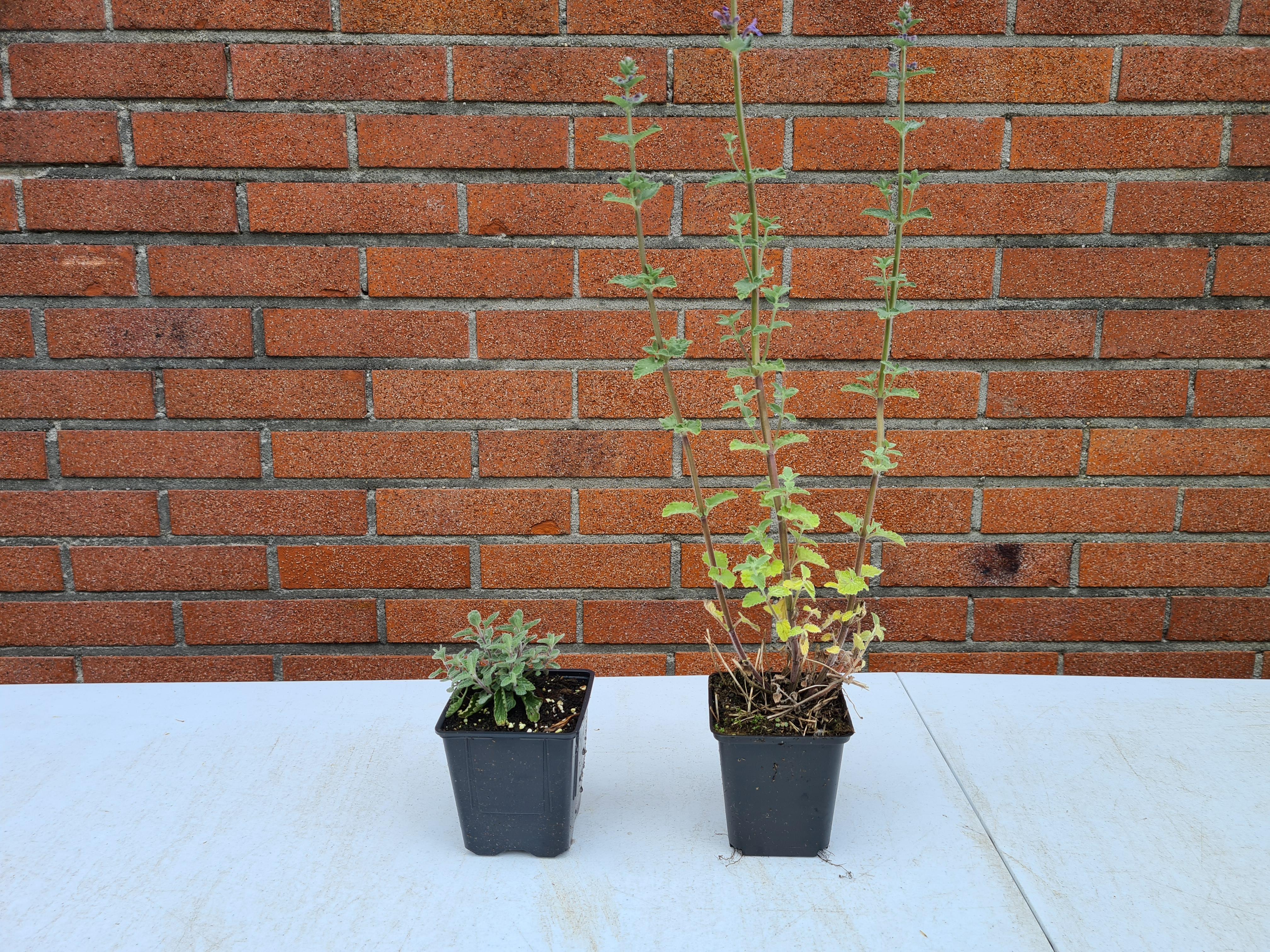 tuinplanten beeld borderpakket yarinde