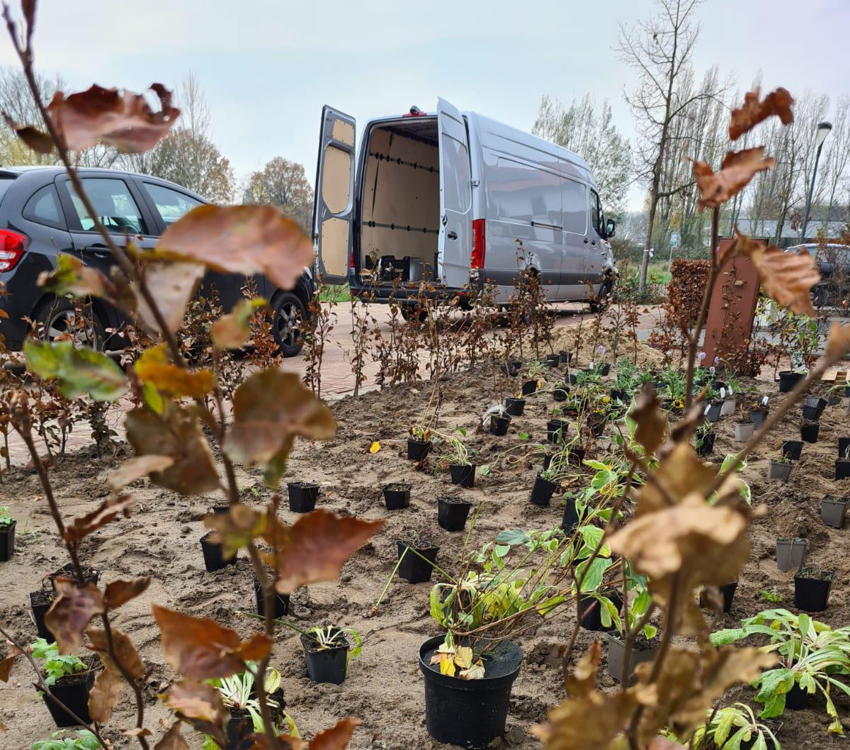 tuinplanten leveren door Nederland en vlaanderen
