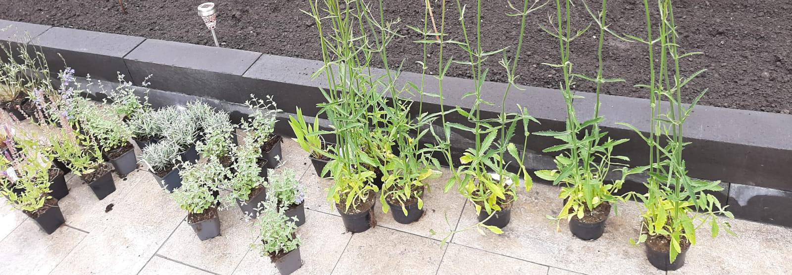 borderpakketten tuinplanten borders