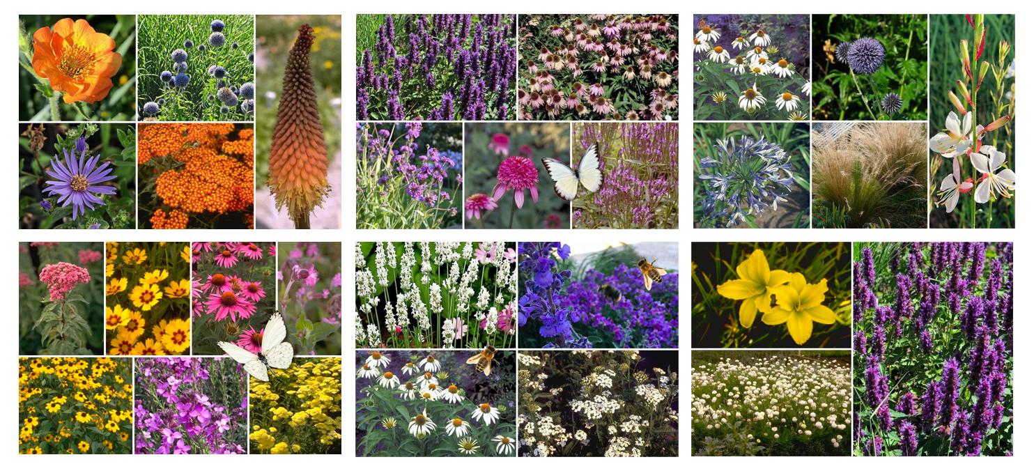 kleuren combineren tuinplanten border smalle border lange border