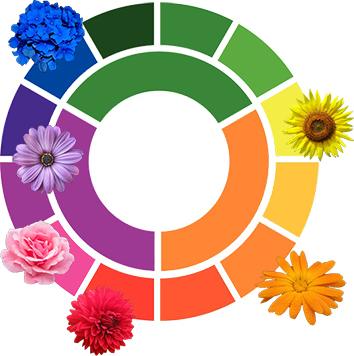 kleurenwiel inspiratie bloei kleuren combineren tuin borderpakket
