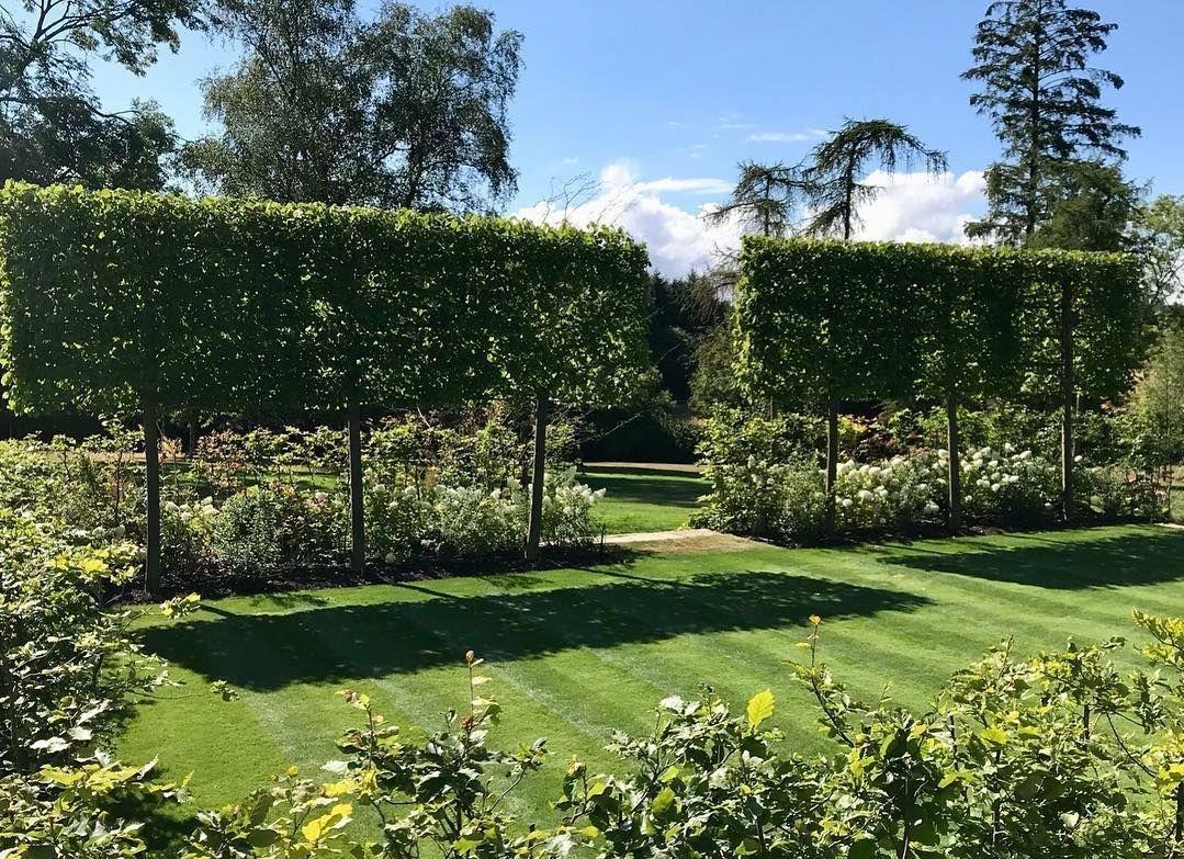 leibomen in de tuin aanplanten