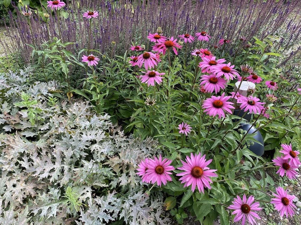 mooie opbouw borders tuin met groepjes planten