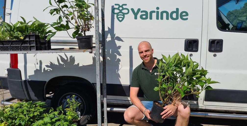 hulp planten zoeken voor tuin