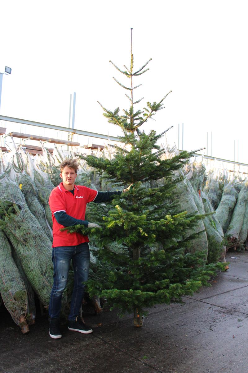 Echte Kerstboom 3 5 Meter Nordmann 350 375 Cm Kopen
