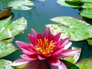 Elektra Aanleggen Tuin : Tuinvijver aanleggen tips zelf vijver maken in tuin siervijver
