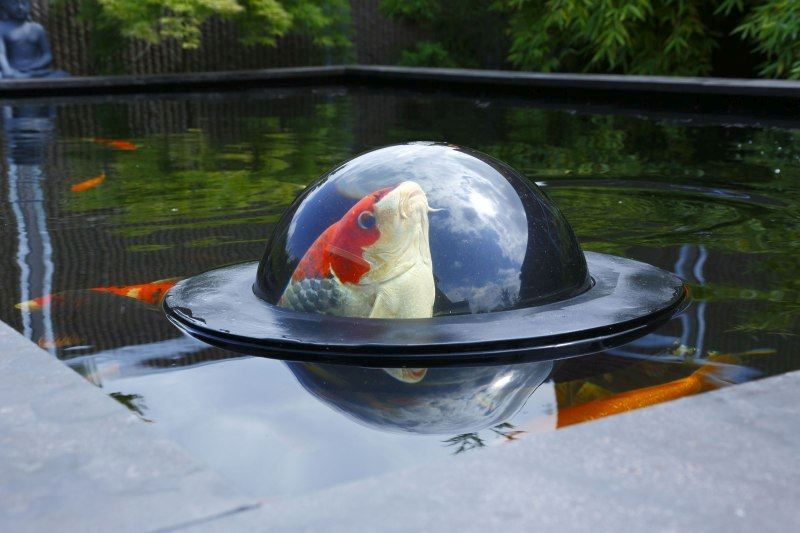 Vijver Drijvende Visbol Kopen Velda Floating Fish Dome Online