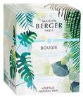 Maison Berger Geurkaars Fresh Eucalyptus