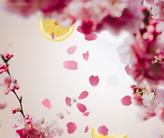 Lampe Berger Navulling Cherry Blossom 1 liter