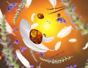 Maison Berger Navulling Aroma Delicate Amber 200 ml