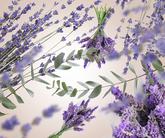 Lampe Berger navulling Lavender Fields - 500 ml