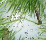 Maison Berger geurstokjes Fresh Green Grass