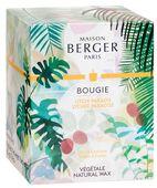 Maison Berger geurkaars Lychee Paradise