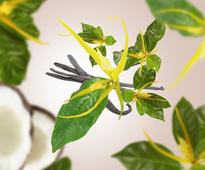 Maison Berger geurstokjes Ylang's Sun sfeer