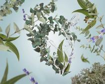 Maison Berger geurkaars Fresh Eucalyptus sfeer
