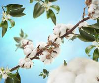 Maison Berger geurkaars Cotton Caress sfeer