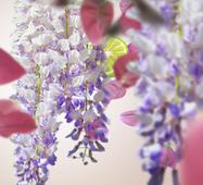 Maison Berger geurkaars Bouquet Liberty sfeer
