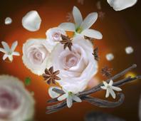 Maison Berger geurkaars Aroma Oriental Comfort sfeer