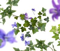Maison Berger geurstokjes Lolita Lempicka Premium transparant sfeer