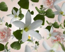 Maison Berger geurstokjes Precious Jasmine sfeer