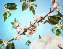 maison-berger-cotton-caress-sfeer
