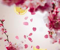 Lampe Berger navulling Cherry Blossom 500 ml sfeer