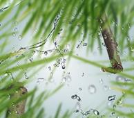 Maison Berger geurstokjes Fresh Green Grass sfeer