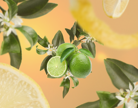 Maison Berger navulling Lemon Flower 200 ml sfeer