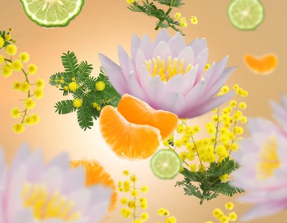 maison-berger-aroma-sweet-fruits