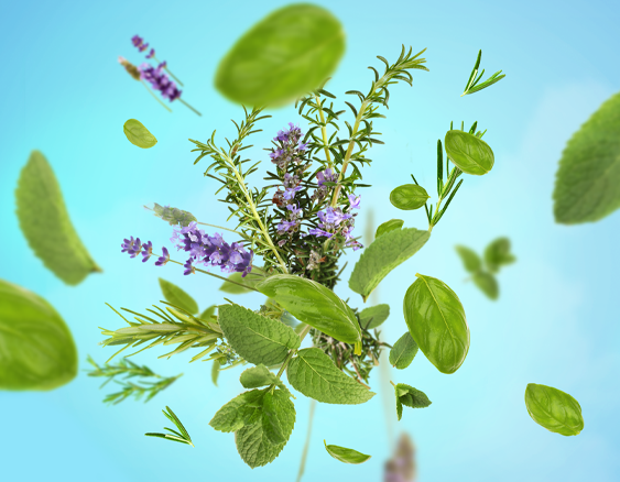 maison-berger-aromatic-leaves-sfeer