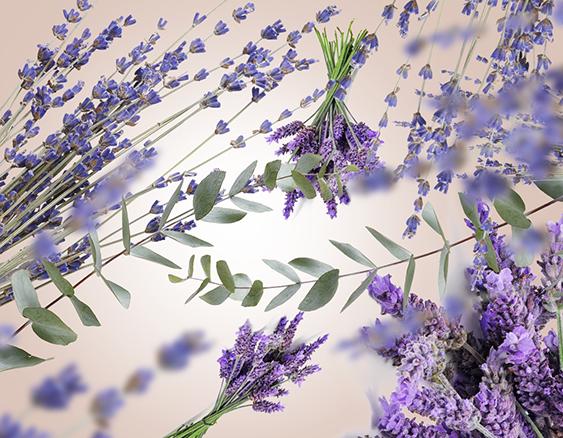 maison-berger-lavender-fields-sfeer